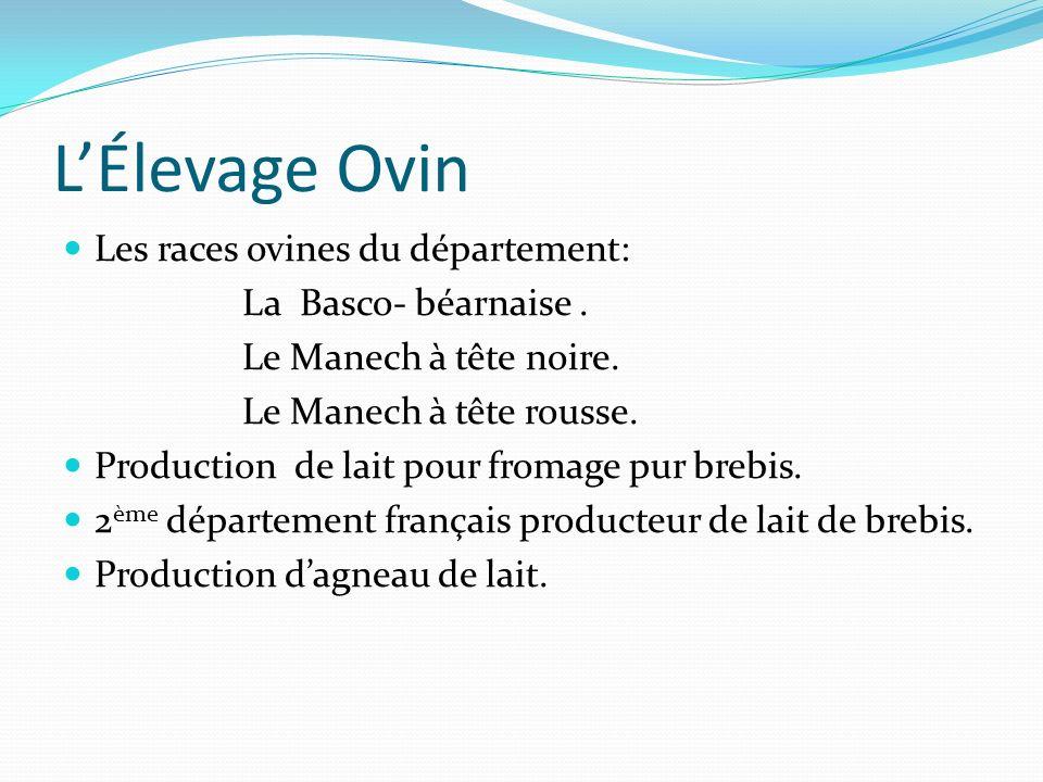 LÉlevage Ovin Les races ovines du département: La Basco- béarnaise. Le Manech à tête noire. Le Manech à tête rousse. Production de lait pour fromage p