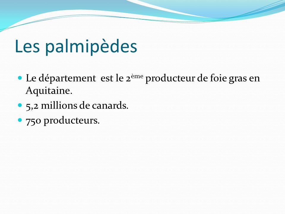 Les palmipèdes Le département est le 2 ème producteur de foie gras en Aquitaine. 5,2 millions de canards. 750 producteurs.