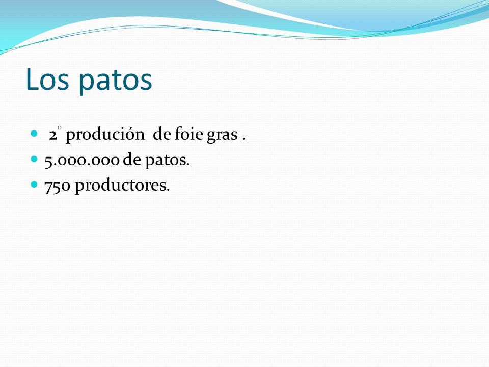Los patos 2 ° produción de foie gras. 5.000.000 de patos. 750 productores.