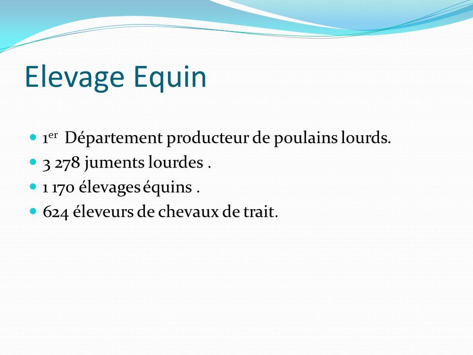 Elevage Equin 1 er Département producteur de poulains lourds. 3 278 juments lourdes. 1 170 élevages équins. 624 éleveurs de chevaux de trait.