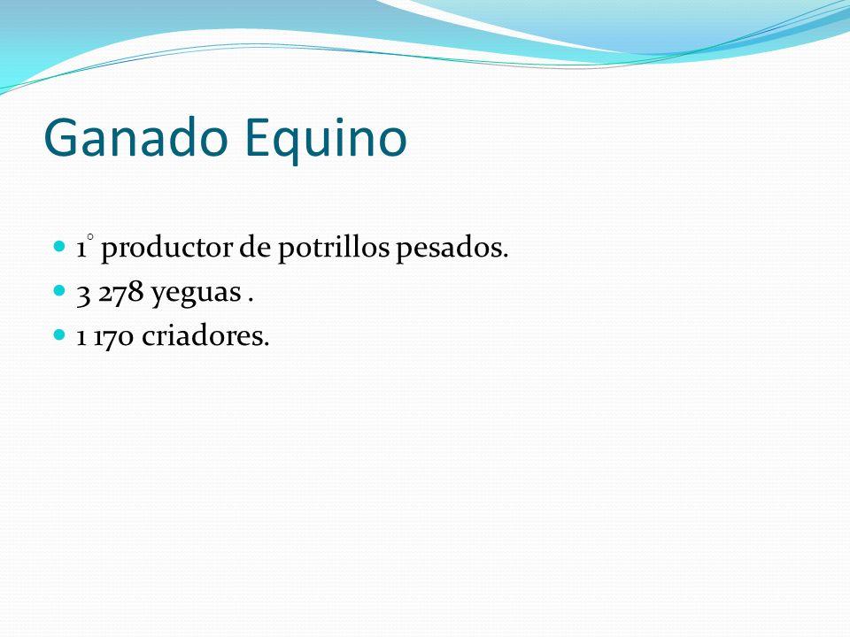 Ganado Equino 1 ° productor de potrillos pesados. 3 278 yeguas. 1 170 criadores.