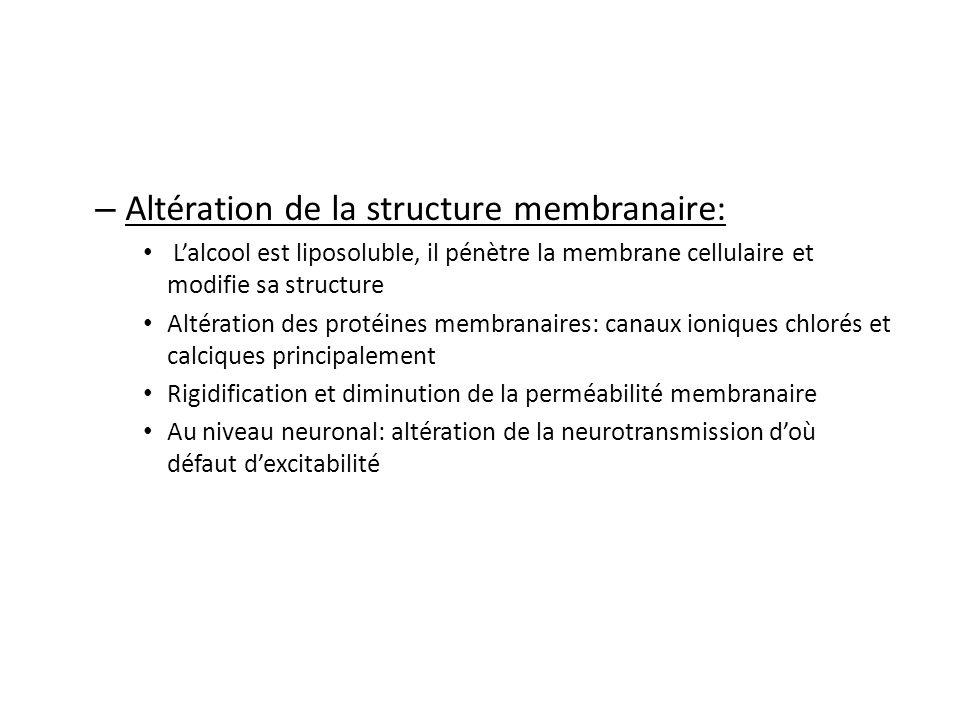 – Altération de la structure membranaire: Lalcool est liposoluble, il pénètre la membrane cellulaire et modifie sa structure Altération des protéines