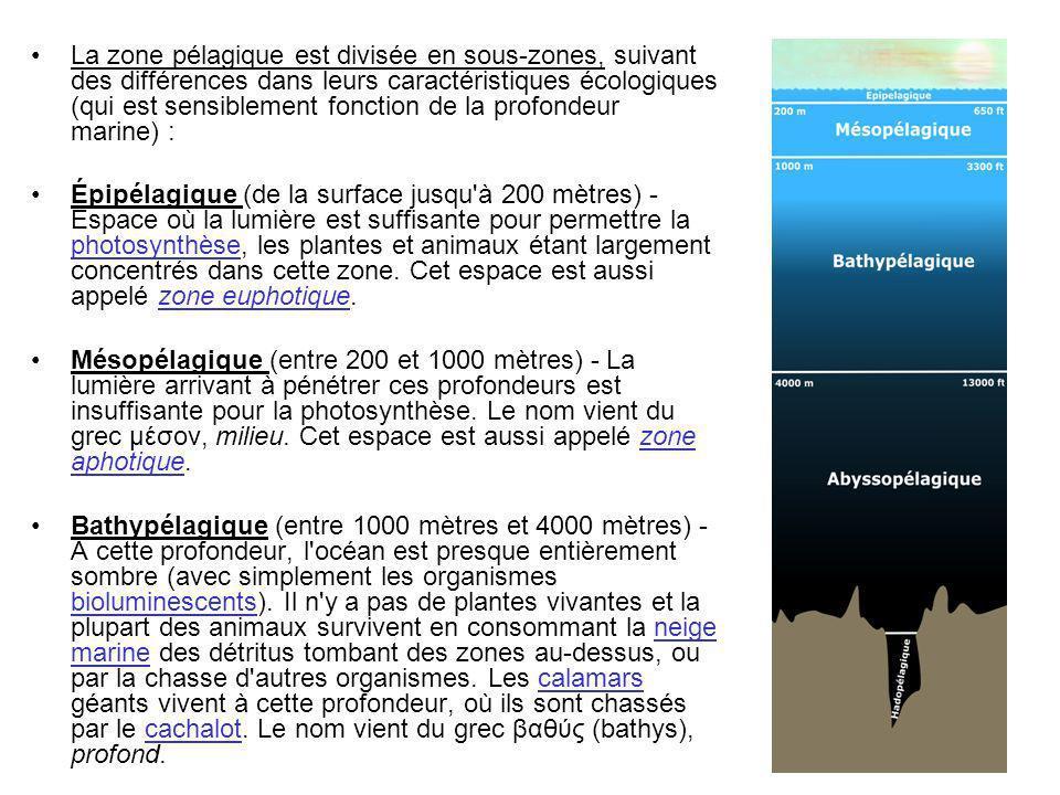 Abyssopélagique (de 4000 mètres jusqu à la crôute océanique) - Aucune lumière quelle qu elle soit ne pénètre à cette profondeur.