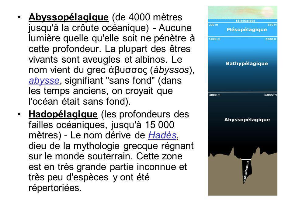 Les zones épipélagiques et mésopélagiques (sujet à caution) forment la zone photique.