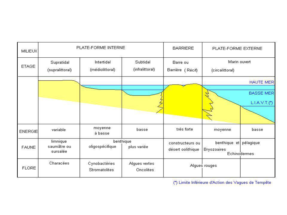 Cycle du carbone Cf. chapitre le cycle du carbone