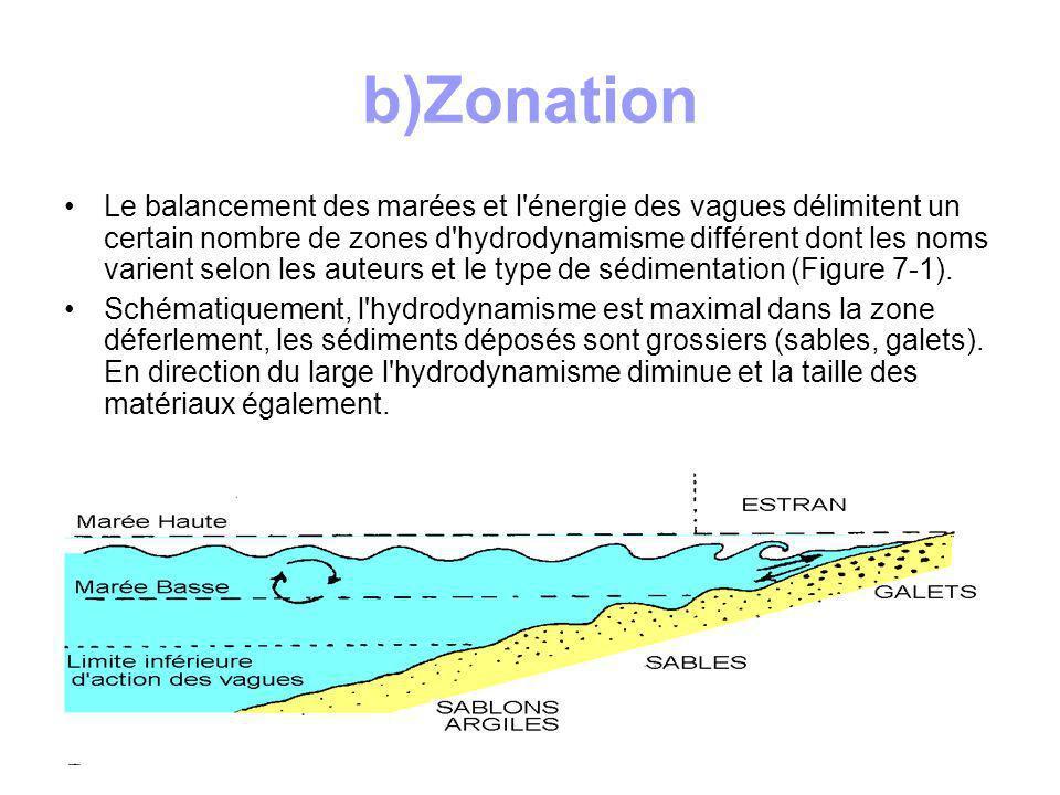 2.3 Les vasières Dans les parties protégées du littoral, l hydrodynamisme est plus faible et les particules fines se déposent; les estuaires et les fond de baies présentent ces caractères: Baie du Mont St Michel, Baie de Somme, Estuaire de la Gironde, Bouches de l Escaut, de la Meuse et du Rhin.