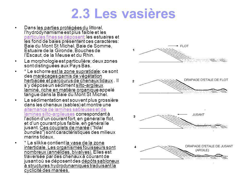 2.3 Les vasières Dans les parties protégées du littoral, l'hydrodynamisme est plus faible et les particules fines se déposent; les estuaires et les fo