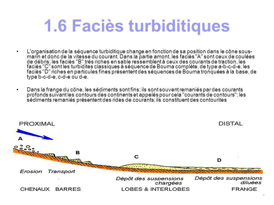 Les turbidites se déposent actuellement au pied de toutes les marges continentales; elles ont pu être bien étudiées par sondage sismique, sonar et carottage.