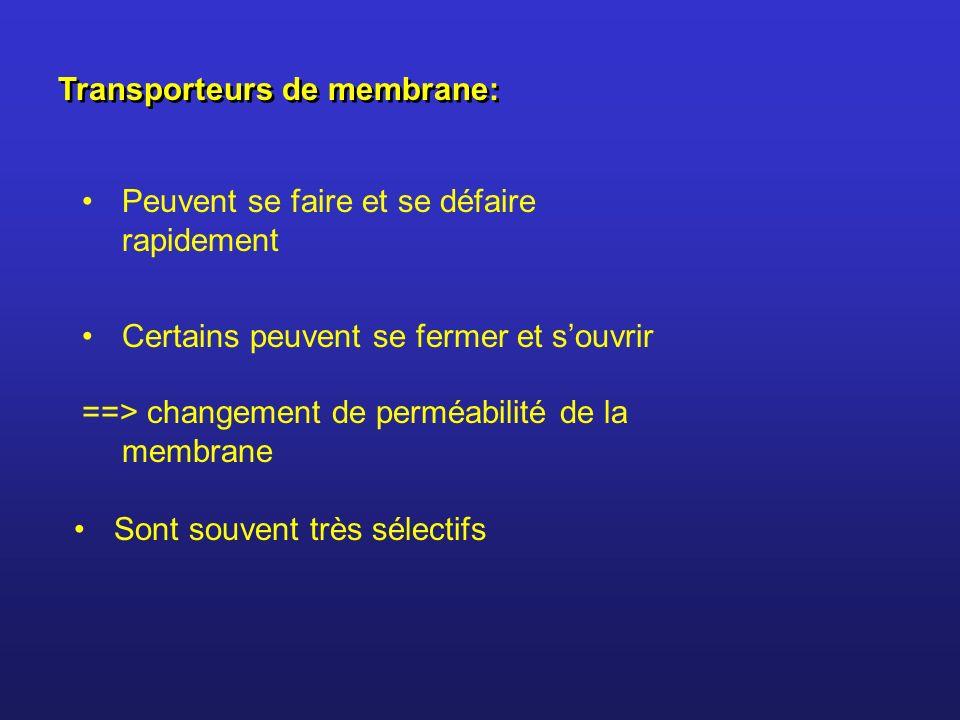 Transporteurs de membrane: Peuvent se faire et se défaire rapidement Certains peuvent se fermer et souvrir ==> changement de perméabilité de la membra
