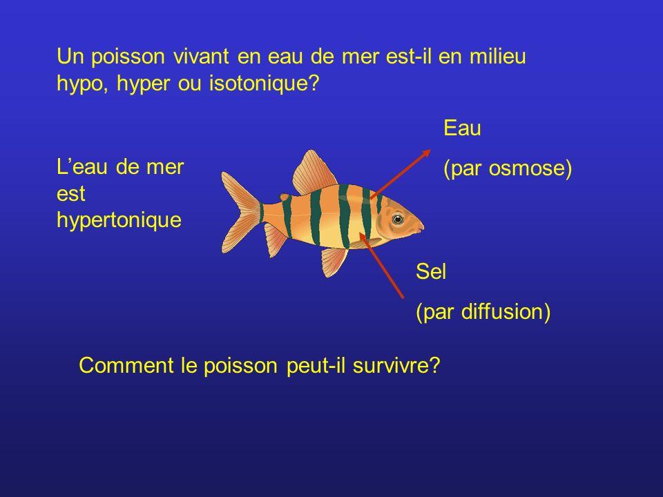 Un poisson vivant en eau de mer est-il en milieu hypo, hyper ou isotonique? Eau (par osmose) Sel (par diffusion) Comment le poisson peut-il survivre?