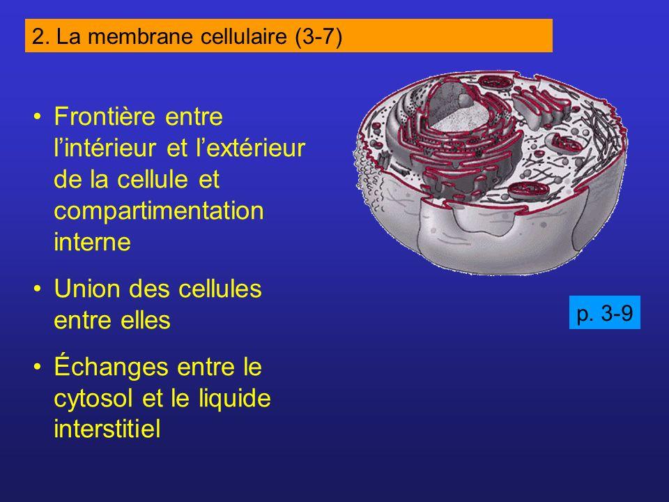 Hypertonique Hypotonique