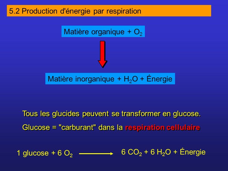 Tous les glucides peuvent se transformer en glucose. Glucose =