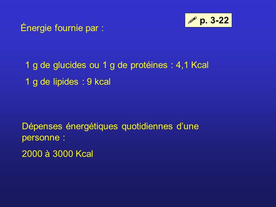 Énergie fournie par : 1 g de glucides ou 1 g de protéines : 4,1 Kcal 1 g de lipides : 9 kcal Dépenses énergétiques quotidiennes dune personne : 2000 à
