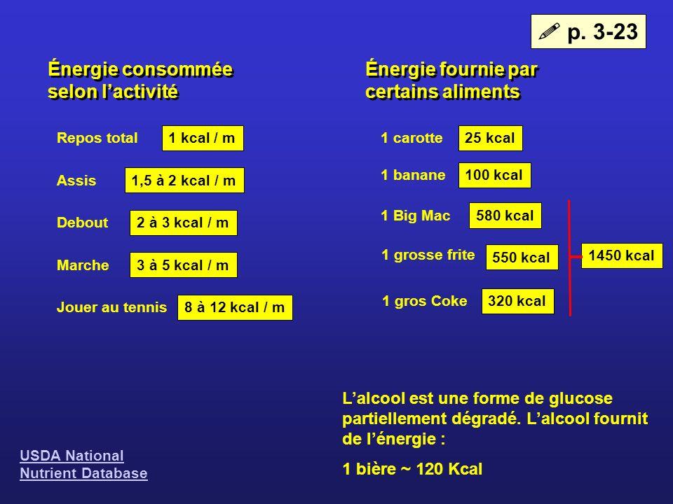 Énergie consommée selon lactivité Énergie fournie par certains aliments Repos total Assis Debout Marche Jouer au tennis 1 kcal / m 1,5 à 2 kcal / m 2