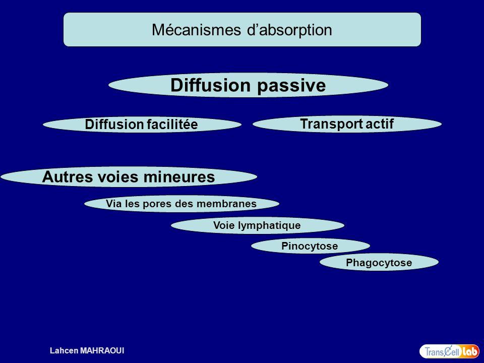 Lahcen MAHRAOUI Mécanismes dabsorption Diffusion passive Diffusion facilitée Transport actif Autres voies mineures Voie lymphatique Pinocytose Phagocy