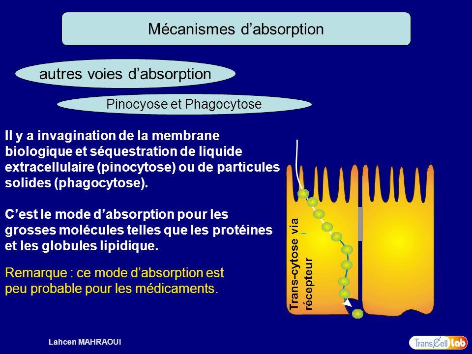 Lahcen MAHRAOUI Mécanismes dabsorption autres voies dabsorption Pinocyose et Phagocytose i Trans-cytose via récepteur Il y a invagination de la membra