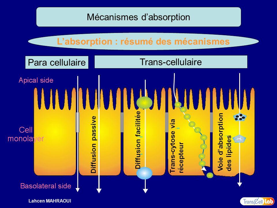 Lahcen MAHRAOUI Mécanismes dabsorption Labsorption : résumé des mécanismes Para cellulaire Trans-cellulaire i i Diffusion passive Diffusion facilitée