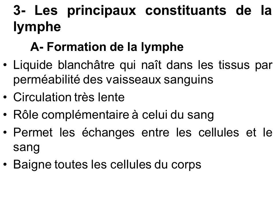 3- Les principaux constituants de la lymphe A- Formation de la lymphe Liquide blanchâtre qui naît dans les tissus par perméabilité des vaisseaux sangu