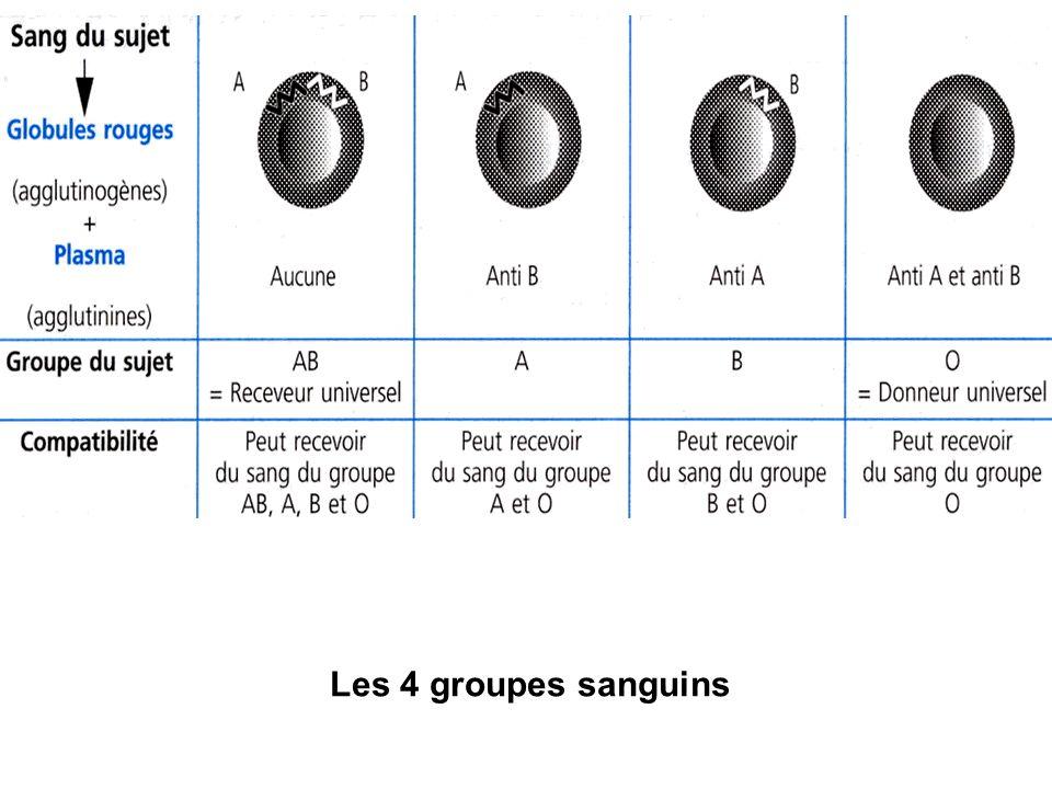 Les 4 groupes sanguins