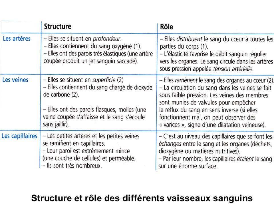 Structure et rôle des différents vaisseaux sanguins