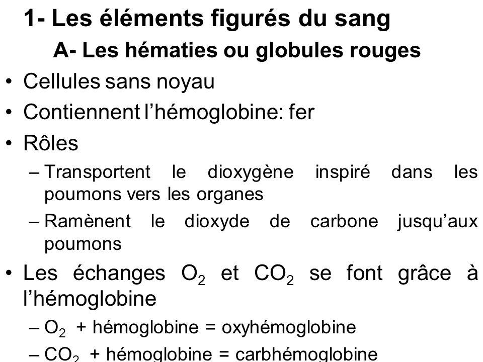 1- Les éléments figurés du sang A- Les hématies ou globules rouges Cellules sans noyau Contiennent lhémoglobine: fer Rôles –Transportent le dioxygène