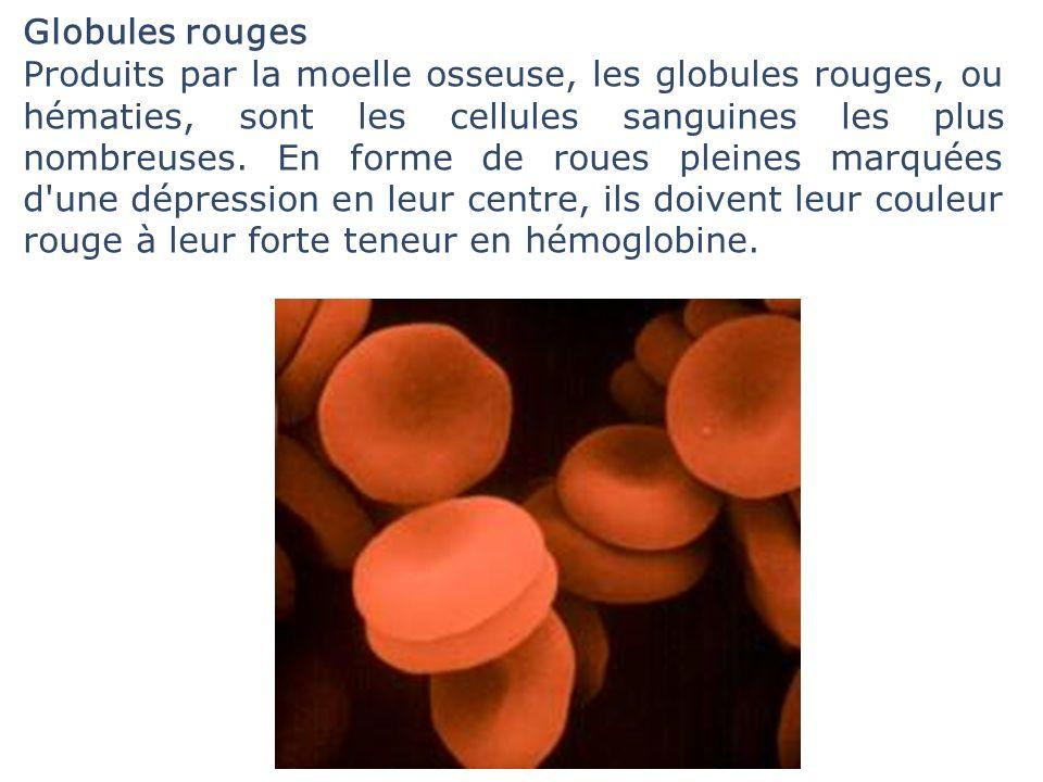Globules rouges Produits par la moelle osseuse, les globules rouges, ou hématies, sont les cellules sanguines les plus nombreuses. En forme de roues p