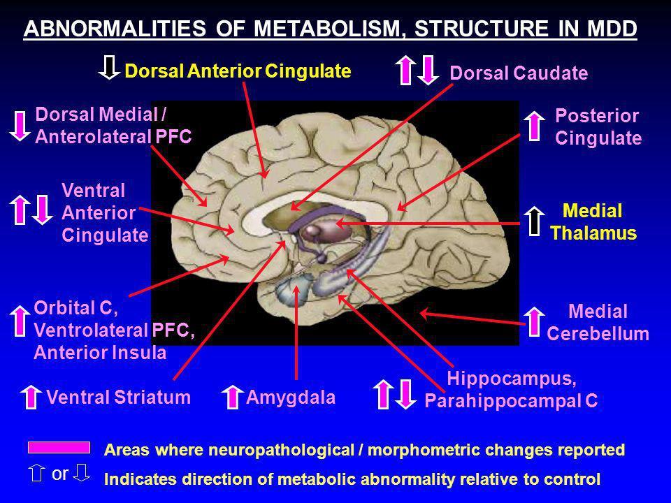 Hippocampus, Parahippocampal C Dorsal Anterior Cingulate Amygdala Orbital C, Ventrolateral PFC, Anterior Insula Ventral Anterior Cingulate Dorsal Medi