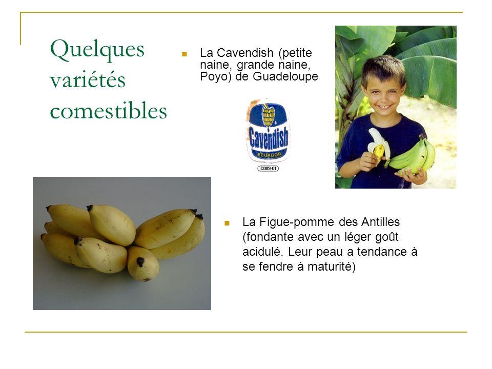 Quelques variétés comestibles La Cavendish (petite naine, grande naine, Poyo) de Guadeloupe La Figue-pomme des Antilles (fondante avec un léger goût a
