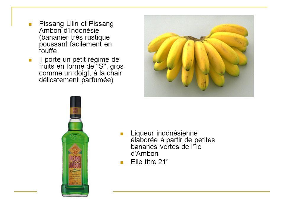 Pissang Lilin et Pissang Ambon dIndonésie (bananier très rustique poussant facilement en touffe. Il porte un petit régime de fruits en forme de