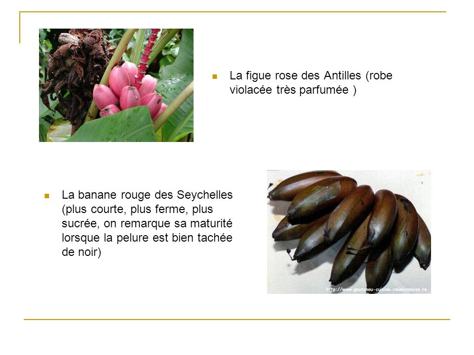 La figue rose des Antilles (robe violacée très parfumée ) La banane rouge des Seychelles (plus courte, plus ferme, plus sucrée, on remarque sa maturit