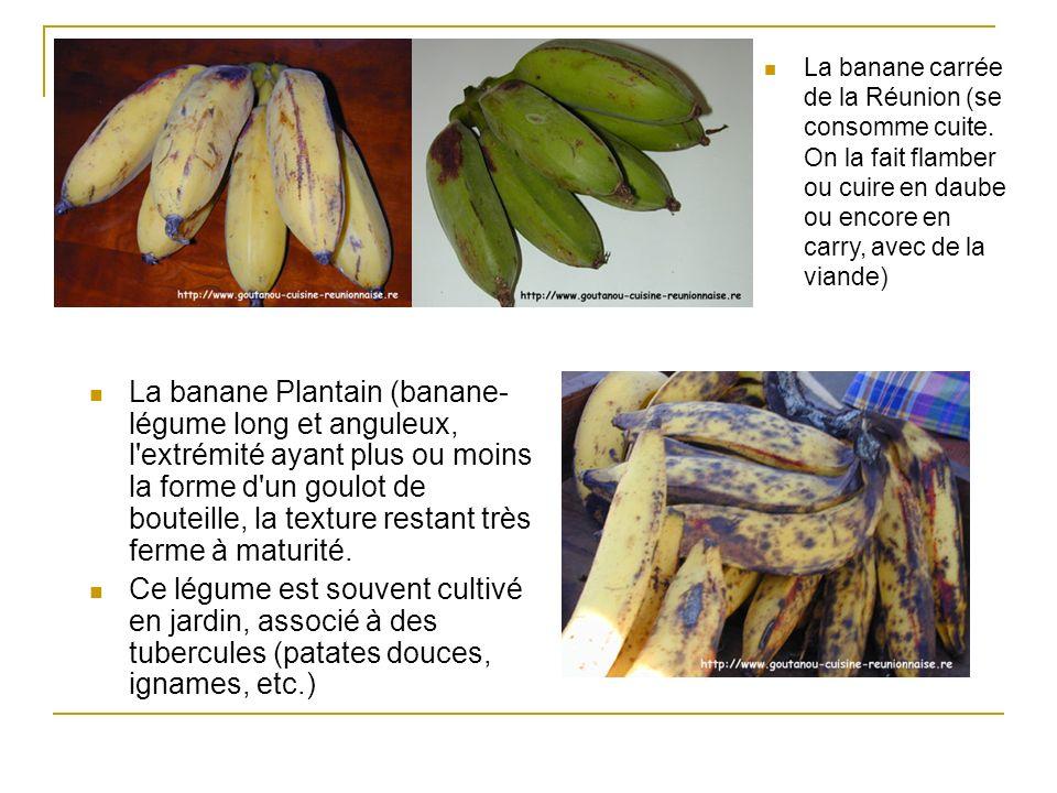 La banane Plantain (banane- légume long et anguleux, l'extrémité ayant plus ou moins la forme d'un goulot de bouteille, la texture restant très ferme