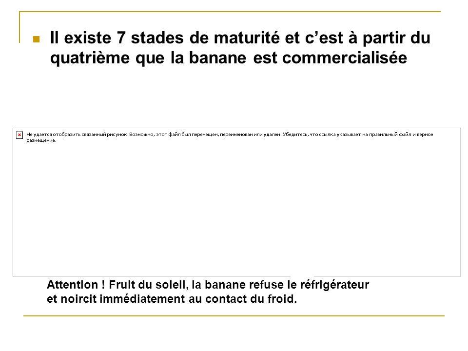 Il existe 7 stades de maturité et cest à partir du quatrième que la banane est commercialisée Attention ! Fruit du soleil, la banane refuse le réfrigé