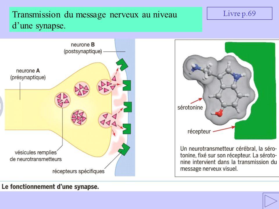 Livre p.69 Transmission du message nerveux au niveau dune synapse.