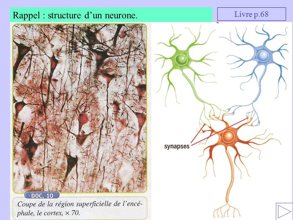 Rappel : structure dun neurone. Livre p.68