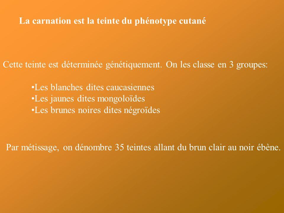 La carnation est la teinte du phénotype cutané Cette teinte est déterminée génétiquement.
