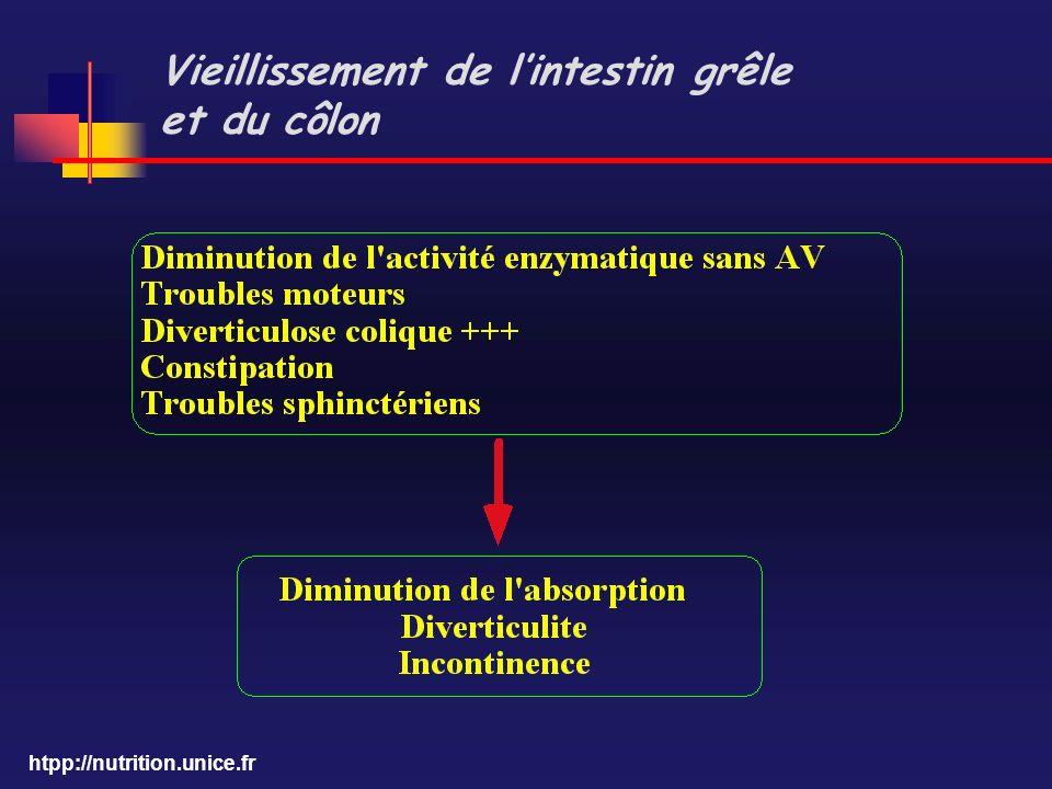 htpp://nutrition.unice.fr Vieillissement de lintestin grêle et du côlon