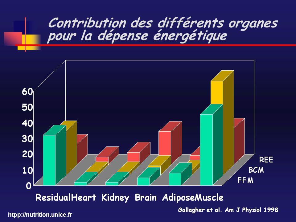 htpp://nutrition.unice.fr Contribution des différents organes pour la dépense énergétique Gallagher et al. Am J Physiol 1998