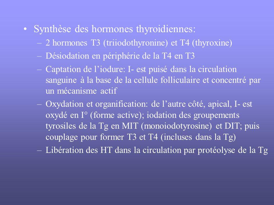Synthèse des hormones thyroidiennes: –2 hormones T3 (triiodothyronine) et T4 (thyroxine) –Désiodation en périphérie de la T4 en T3 –Captation de liodu