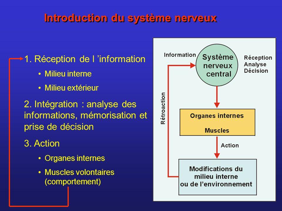 Introduction du système nerveux 1. Réception de l information Milieu interne Milieu extérieur 2. Intégration : analyse des informations, mémorisation