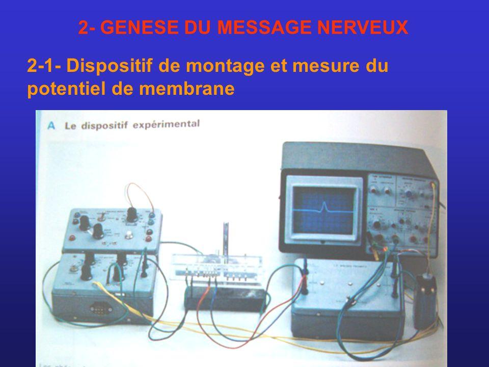 2- GENESE DU MESSAGE NERVEUX 2-1- Dispositif de montage et mesure du potentiel de membrane