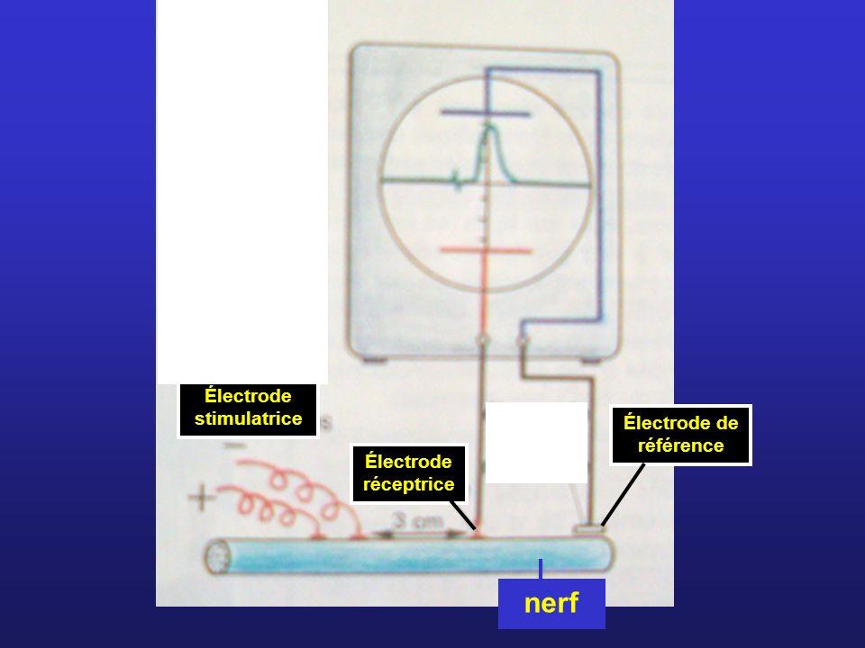 Électrode stimulatrice Électrode réceptrice Électrode de référence nerf