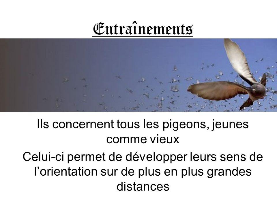 Entraînements Ils concernent tous les pigeons, jeunes comme vieux Celui-ci permet de développer leurs sens de lorientation sur de plus en plus grandes