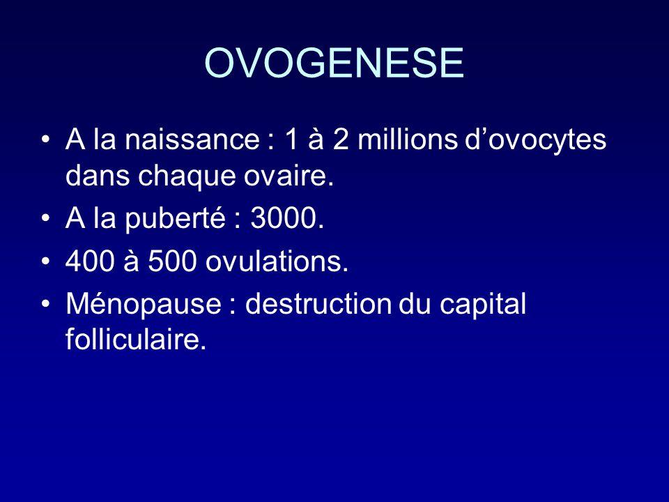 OVOGENESE A la naissance : 1 à 2 millions dovocytes dans chaque ovaire. A la puberté : 3000. 400 à 500 ovulations. Ménopause : destruction du capital