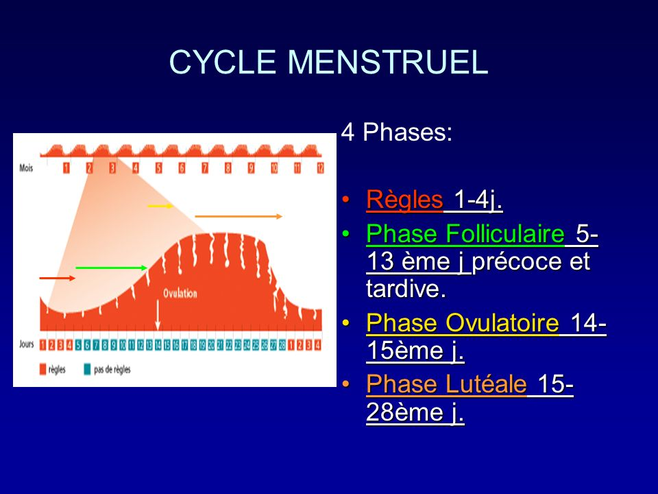 CYCLE MENSTRUEL 4 Phases: Règles 1-4j.Règles 1-4j. Phase Folliculaire 5- 13 ème j précoce et tardive.Phase Folliculaire 5- 13 ème j précoce et tardive