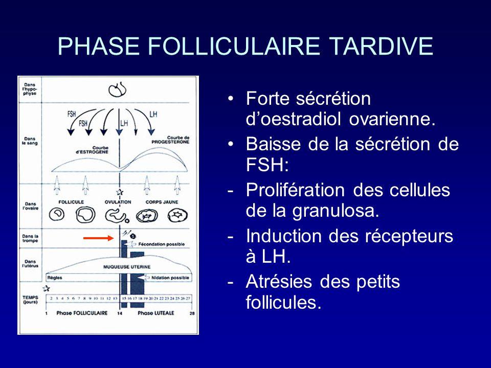 PHASE FOLLICULAIRE TARDIVE Forte sécrétion doestradiol ovarienne. Baisse de la sécrétion de FSH: -Prolifération des cellules de la granulosa. -Inducti
