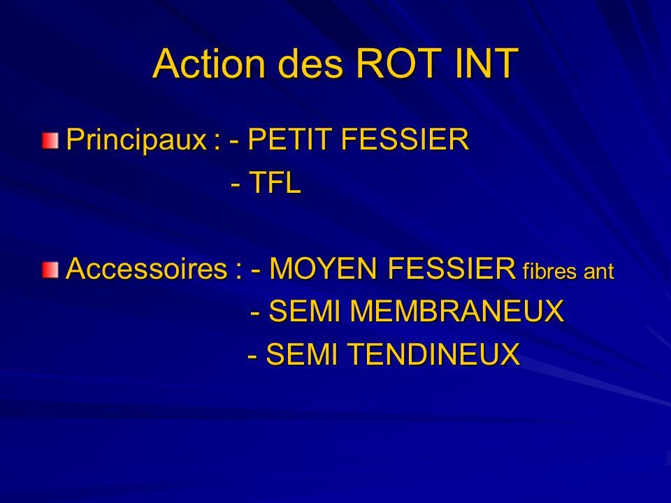Action des ROT INT Principaux : - PETIT FESSIER - TFL - TFL Accessoires : - MOYEN FESSIER fibres ant - SEMI MEMBRANEUX - SEMI MEMBRANEUX - SEMI TENDIN