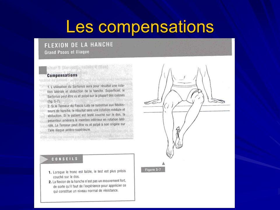 Facteurs limitants le mouvement Contact de la cuisse sur labdomen lorsque le genou est fléchi; Tension du grand fessier; Tension des muscles ischio-jambiers lorsque le genou est tendu;
