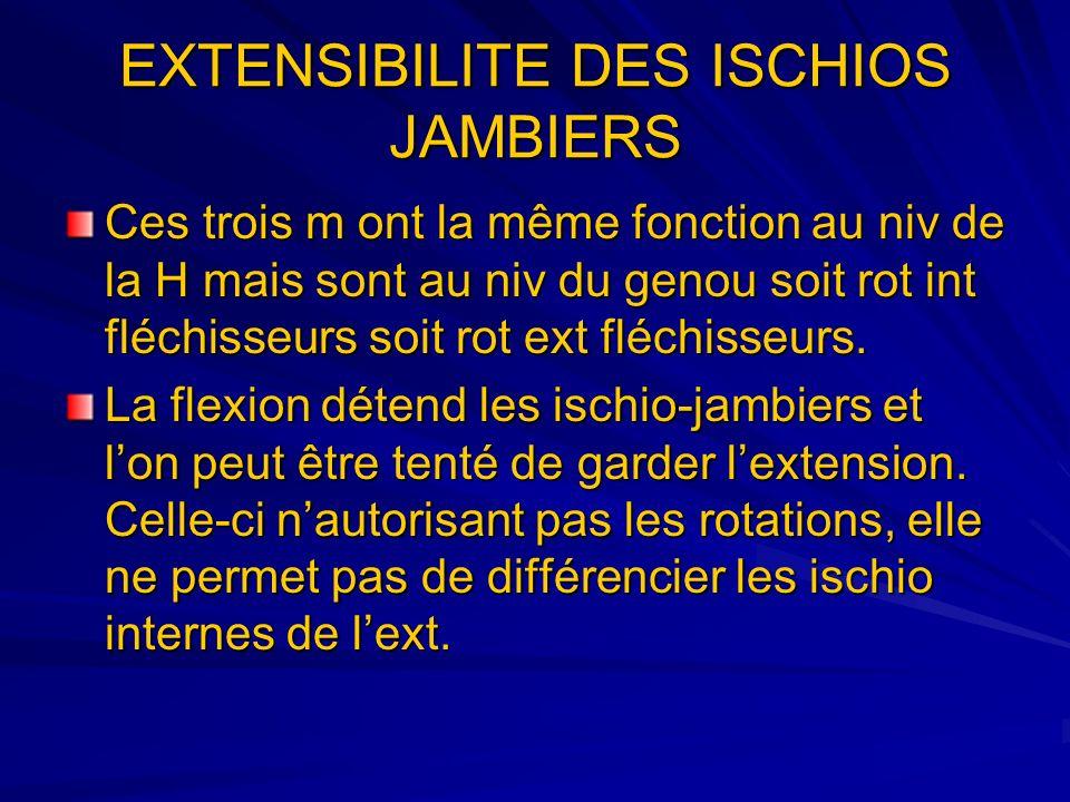 EXTENSIBILITE DES ISCHIOS JAMBIERS Ces trois m ont la même fonction au niv de la H mais sont au niv du genou soit rot int fléchisseurs soit rot ext fl