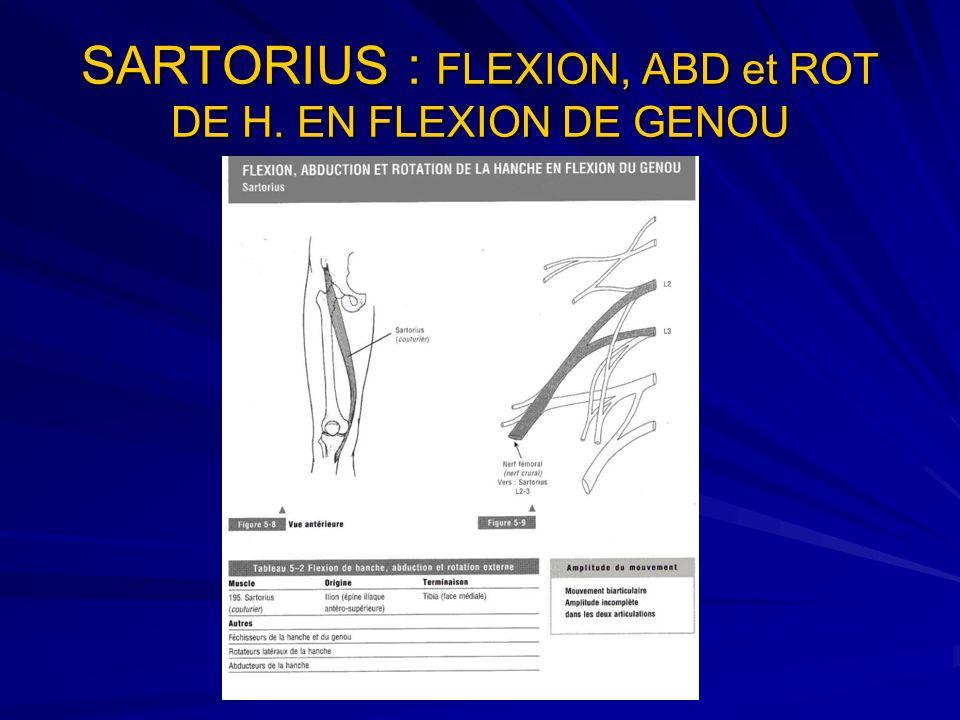 SARTORIUS : FLEXION, ABD et ROT DE H. EN FLEXION DE GENOU