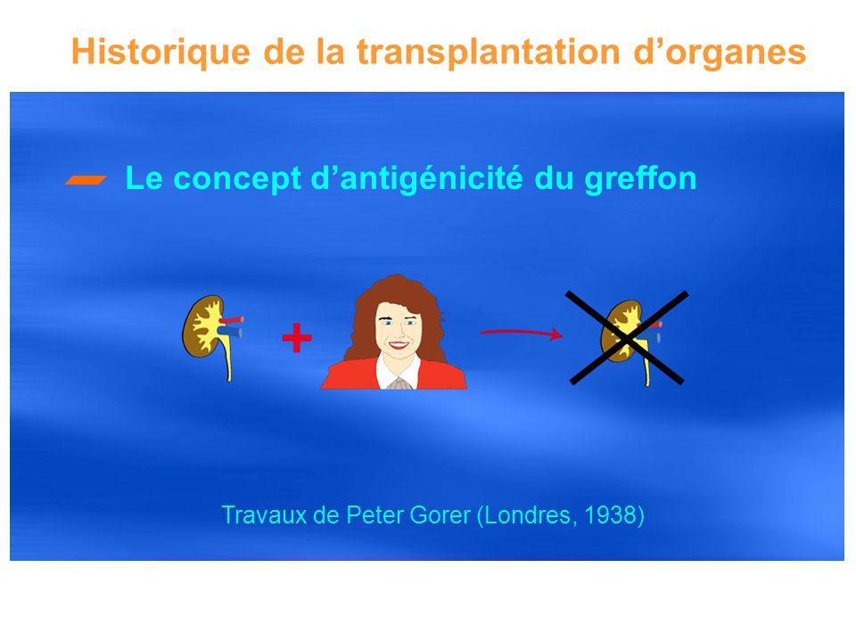 Le concept dantigénicité du greffon Historique de la transplantation dorganes Travaux de Peter Gorer (Londres, 1938)